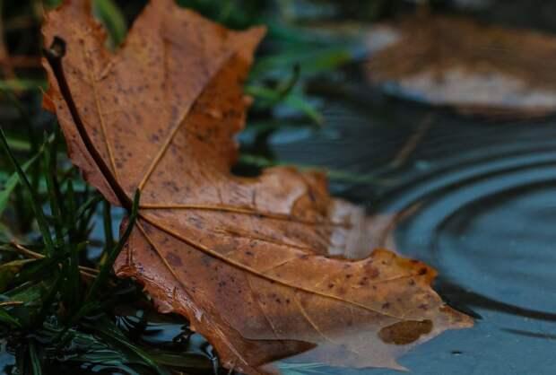 Дождливая пятница завершает рабочую неделю в Удмуртии