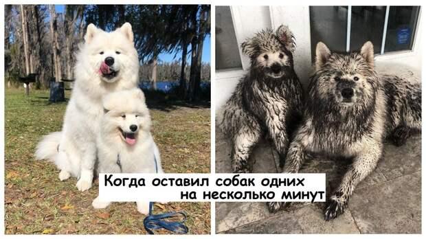 14 фото собак, которые гарантировано поднимут настроение