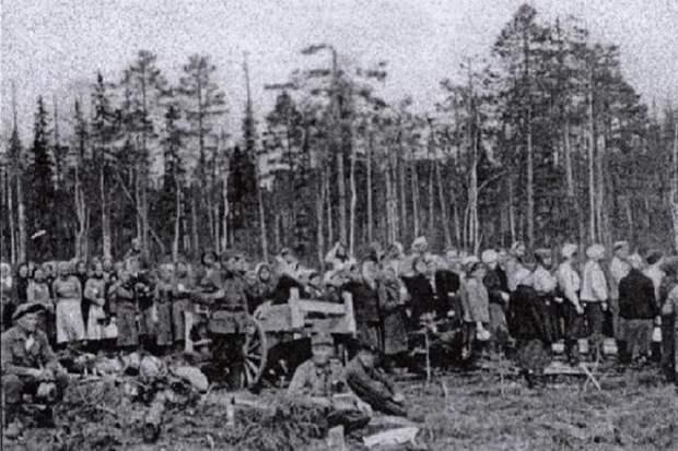 Финские концлагеря в Карелии были смертоноснее немецких — историк