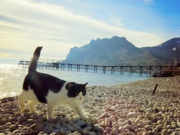 Стало известно, какой город привлекает туристов в Крыму