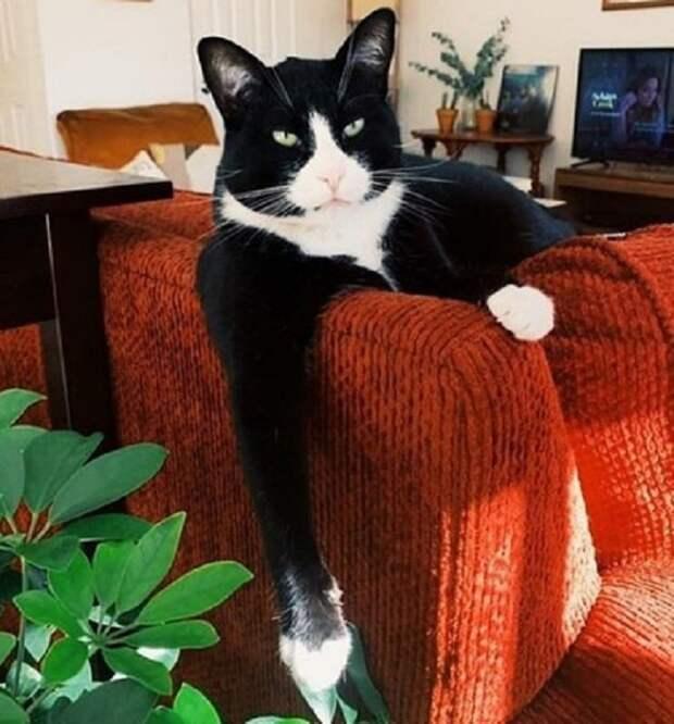 Кот на кресле