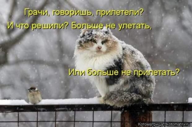 Свежая котоматрица для хорошего настроения (34 фото)