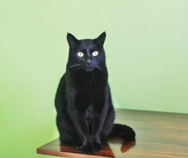 Кот заболел, и хозяева просто решили усыпить его кошка, приют, усыпление, черный кот