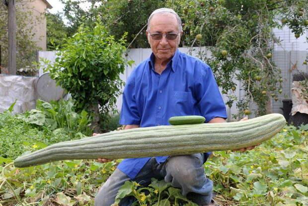Невероятные факты об овощах, которых вы наверняка не знали