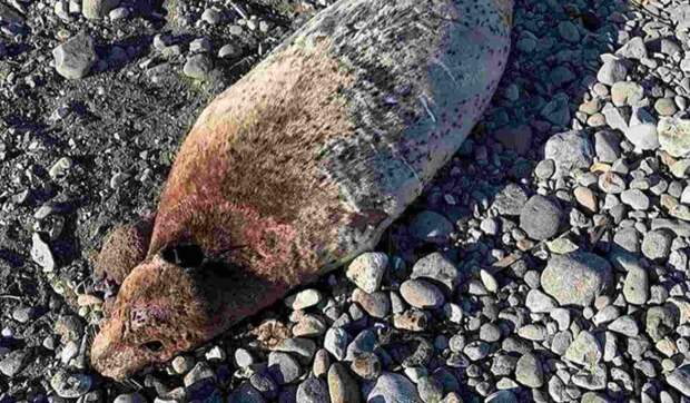 Экологическая катастрофа на Камчатке: пострадавших из-за отравленной нефтью воды уже десятки
