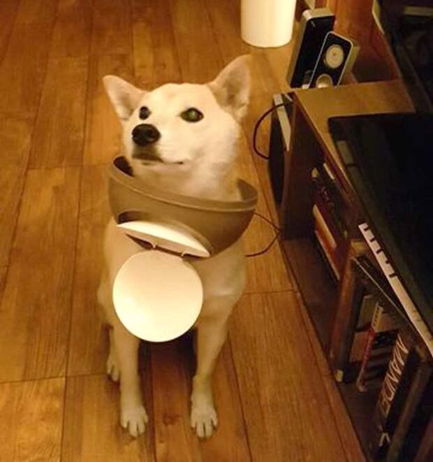 собака залезла в мусорное ведро