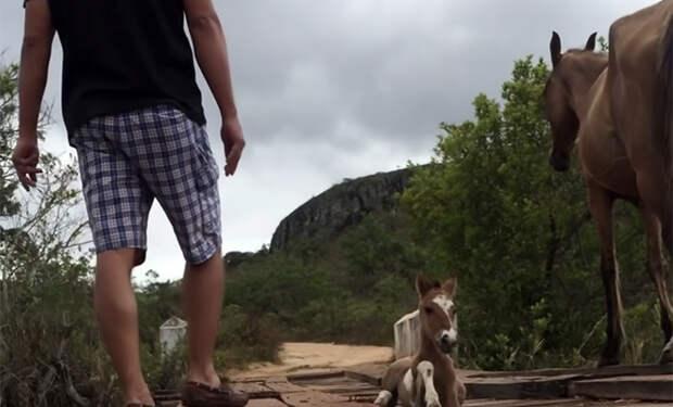 Жеребенок застрял в провале досок на мосте, и лошадь нашла людей и позвала их на помощь. Видео