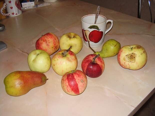 Яблоки и груши не нужно выбрасывать, даже если они чуть подгнили. / Фото: artfile.me