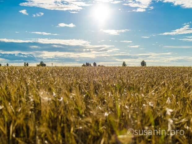 В середине недели в Удмуртии потеплеет до +25