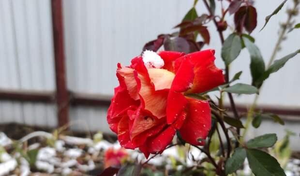 В Татарстане на следующей неделе ожидается снег