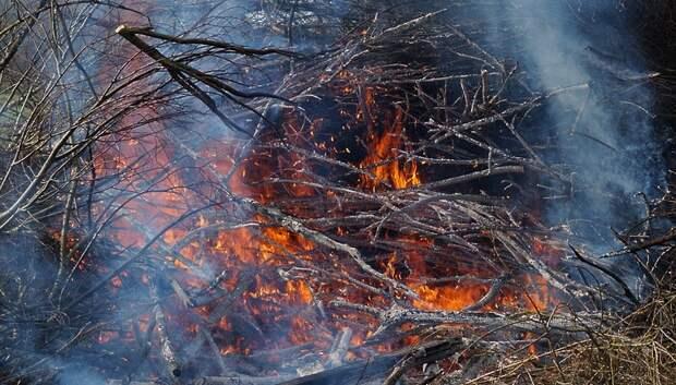 Жителей Подмосковья предупредили о высокой вероятности природных пожаров в среду