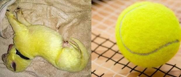 Щенок и мячик