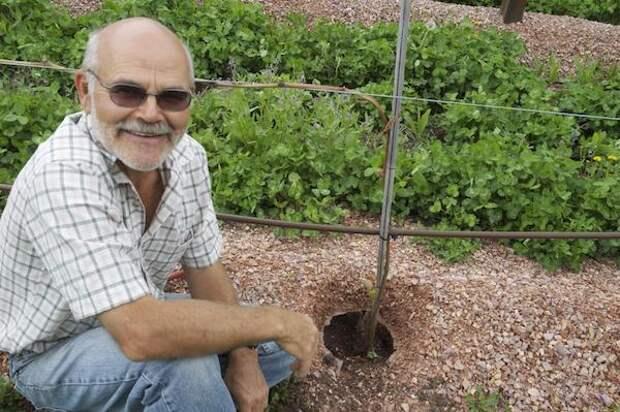 Пересадка взрослых кустов винограда