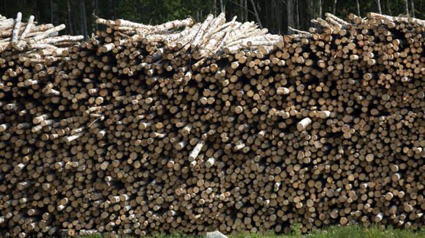 Составы с лесом-кругляком - в Китай? Очевидец заснял, что происходит за год до полного запрета