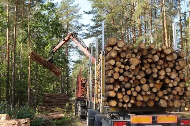 Абрамченко: Сибирь и Дальний Восток - лидеры по незаконной рубке леса