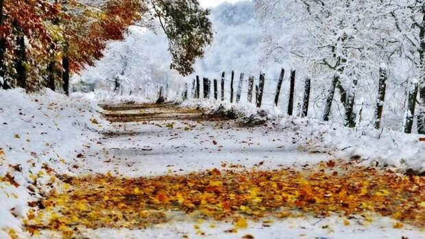 Павшие листья опаснее снега - доказано Ford