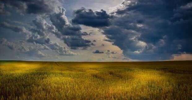 Sohu: США останутся с тоннами гнилой кукурузы из-за действий России и КНР