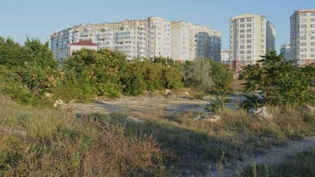 Застройщик побережья в Севастополе объявил войну краснокнижным деревьям