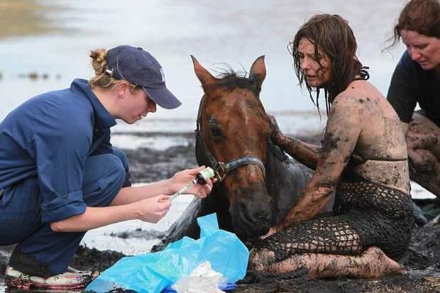 Этот конь тонул в трясине... Но то, как его хозяйка спасала своего люб People Are Awesome, animals