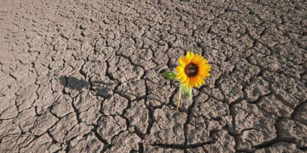 Как сажать растения на глинистой почве? 7 действенных способов