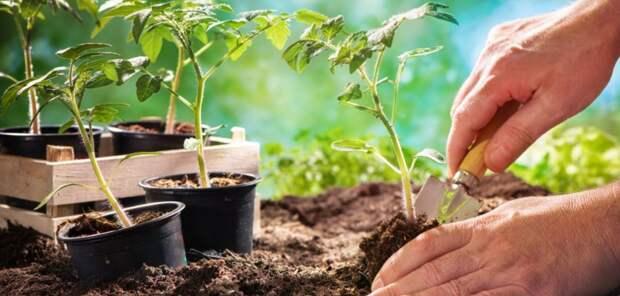 Силы природы помогут огороду: кабачки сажайте утром, а клубнику — вечером