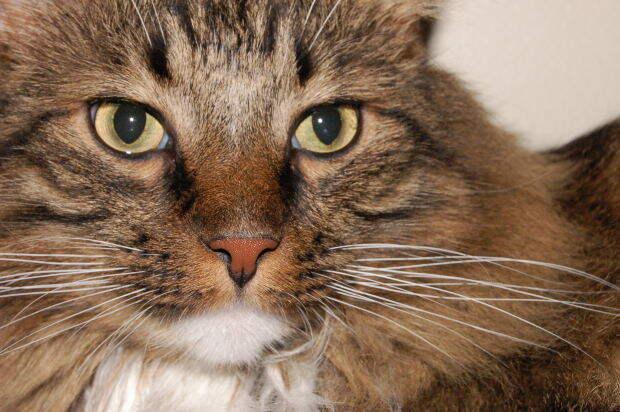http://4.bp.blogspot.com/-HN8HKIPvBxI/UN7Y82FknZI/AAAAAAAADNA/xlBE8HjqFG4/s1600/cats-whiskers-1.jpg