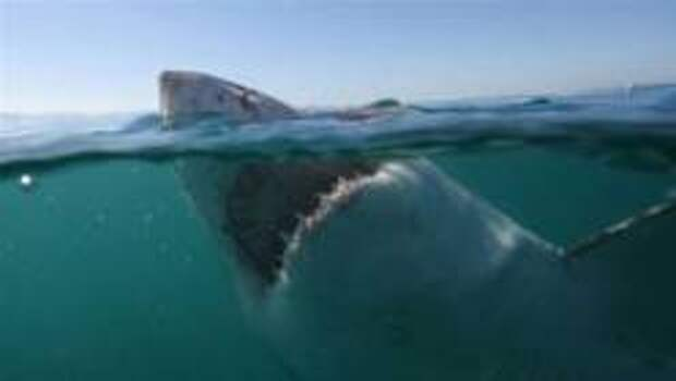 Новое нападение акулы на человека в Египте