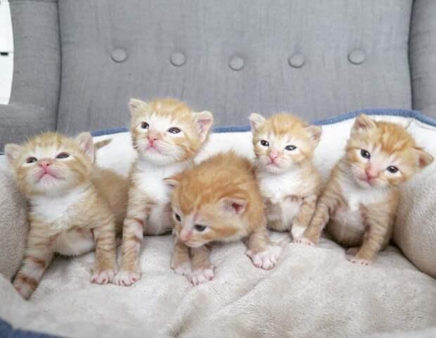 Из гаража послышался плач котят. Пятеро «рыжиков» были брошены мамой