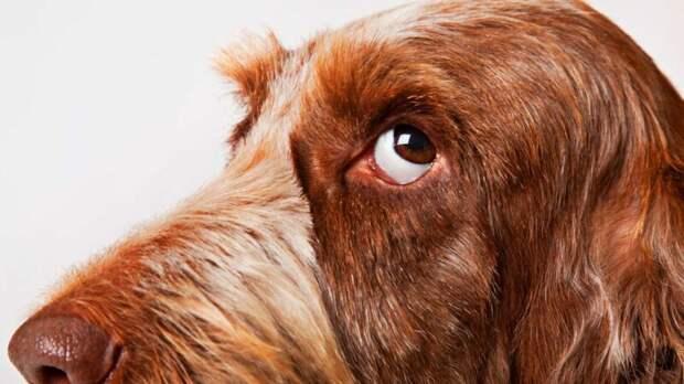 """10 собачьих """"почему?"""", или Всё что вы хотели знать о лучшем друге человека волк, вопросы, домашние животные, животные, ответы, собаки, факты, шарик"""