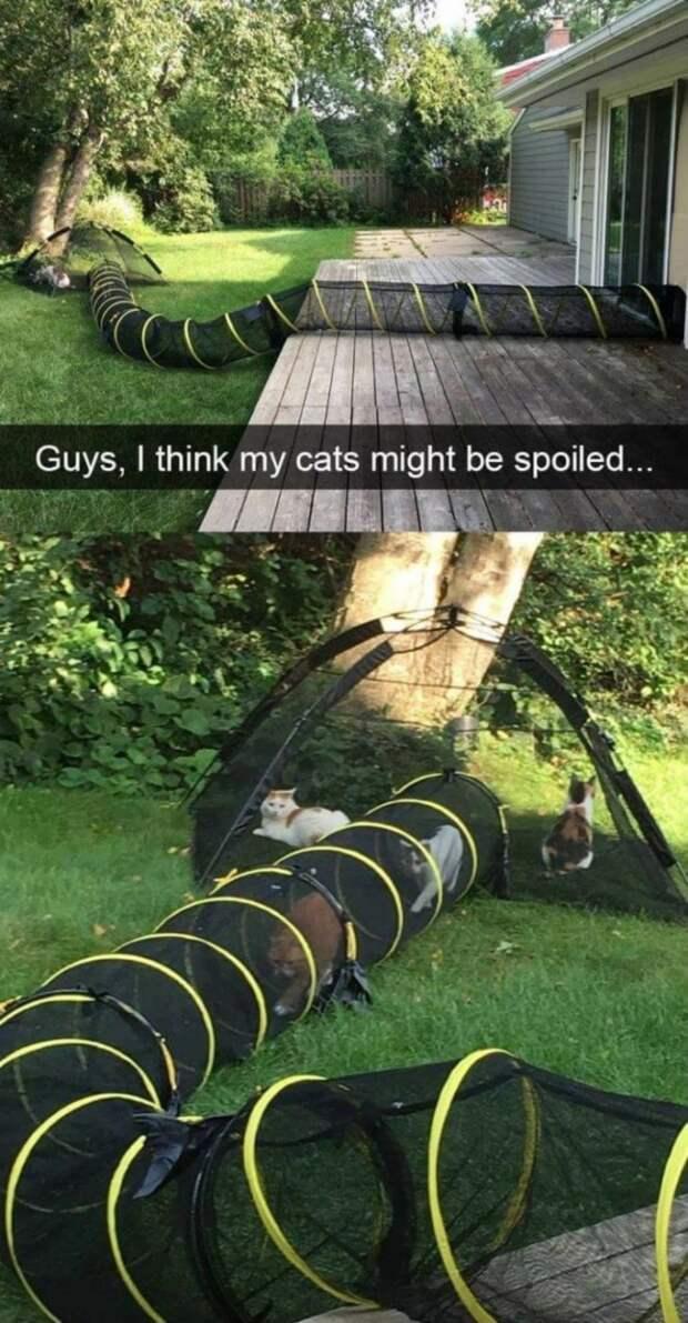 А этих кошек есть собственная палатка во дворе, благодаря которой они могут отдыхать на природе, когда им вздумается домашний питомец, животные, жизнь, кот, прикол