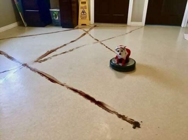 25 доказательств того, что роботы-пылесосы — те еще проказники (26 фото)