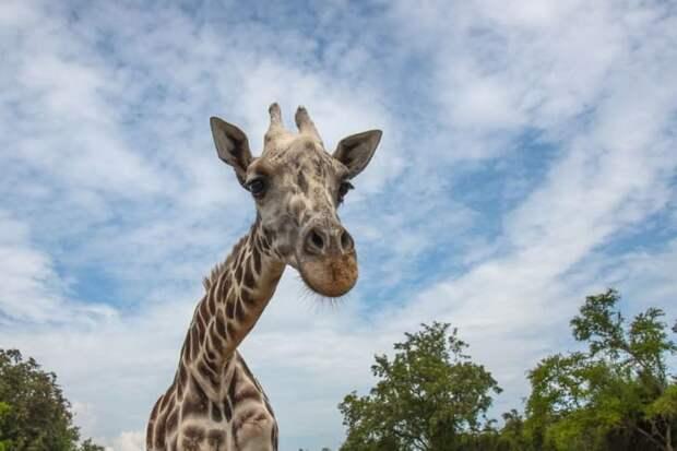 21 неверное представление о животных