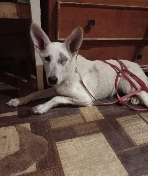 Собака, лишившаяся глаза в Ижевске, могла пострадать не от девочек-подростков