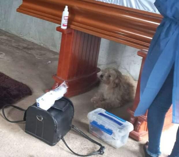 пес у гроба хозяйки
