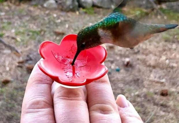 колибри на руке