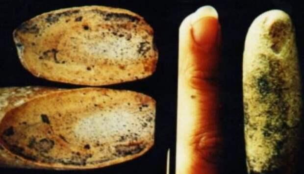 Ископаемый человеческий палец, которому 100 миллионов лет