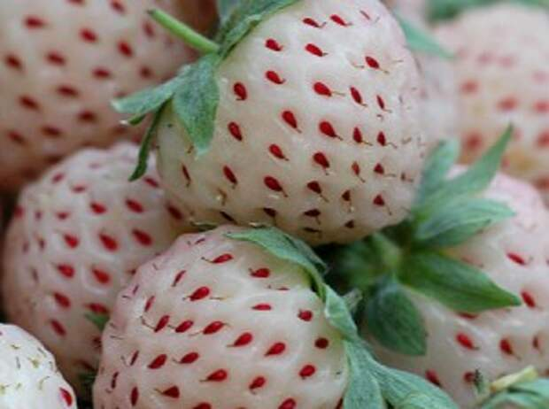 Знакомимся с экзотическими фруктами (Ч. 5-я)
