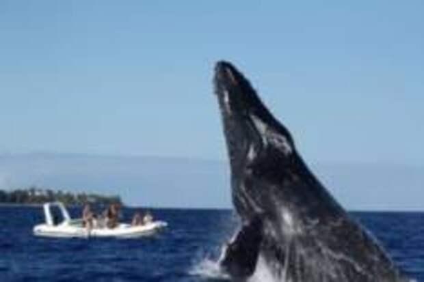 Коронавирус пригнал китов к берегам Франции