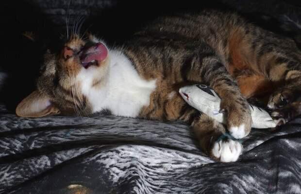 Мышка моя, я твой зайчик!