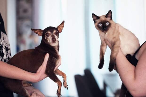 Чипирование домашних животных: что это и чем оно полезно