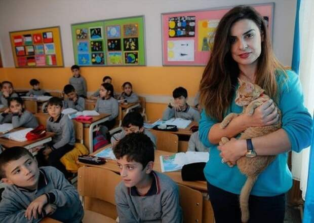 Ученики полюбили кота всей душой, но директор был против его пребывания в школе. И тогда вмешалась учительница