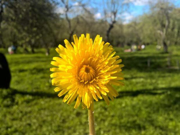 Как привлечь счастье и деньги в начале весны