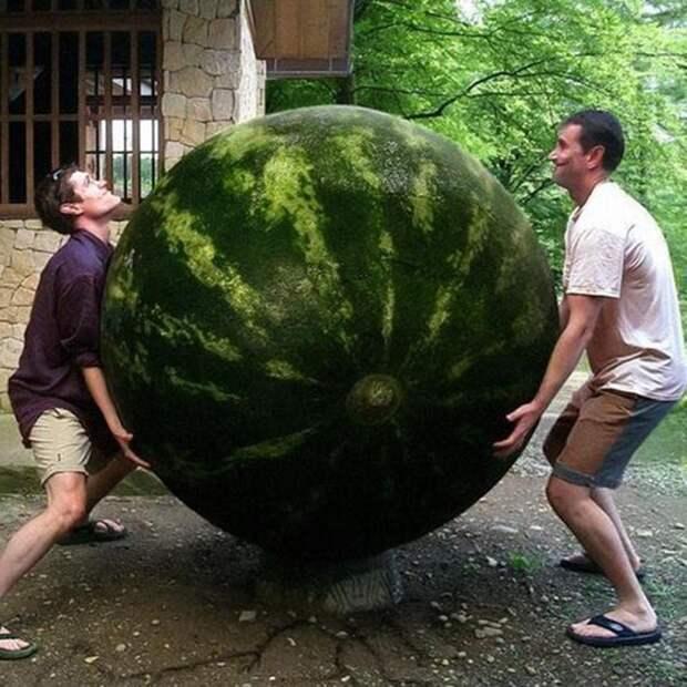 Сколько весит арбуз