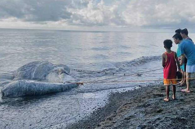 Загадочное морское чудовище привело в ужас филиппинцев