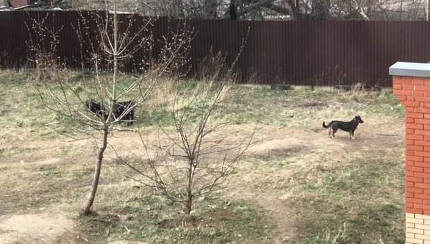 Рабочие отловили двух бездомных собак в микрорайоне Подольска