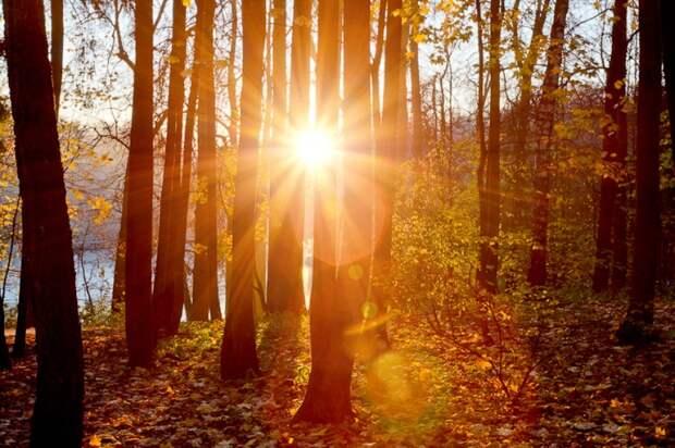 Багряное великолепие: 9 ярких фотографий золотой осени