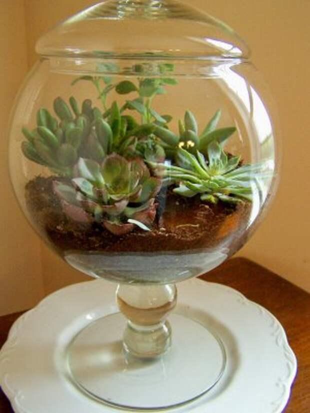 succulents (300x400, 24Kb)