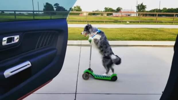Почему собаки гоняются за проезжающими мимо машинами и велосипедистами? волк, вопросы, домашние животные, животные, ответы, собаки, факты, шарик
