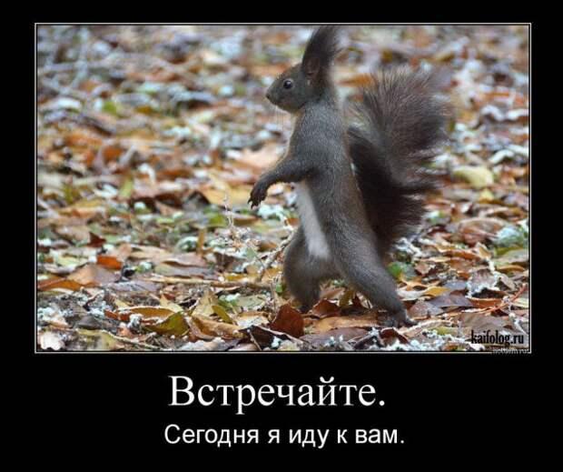 Демотиваторы с животными — Infodays