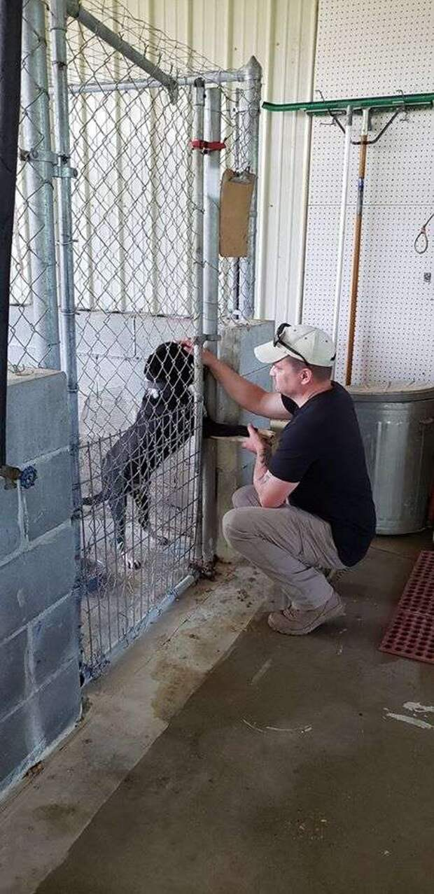 пёс в приюте